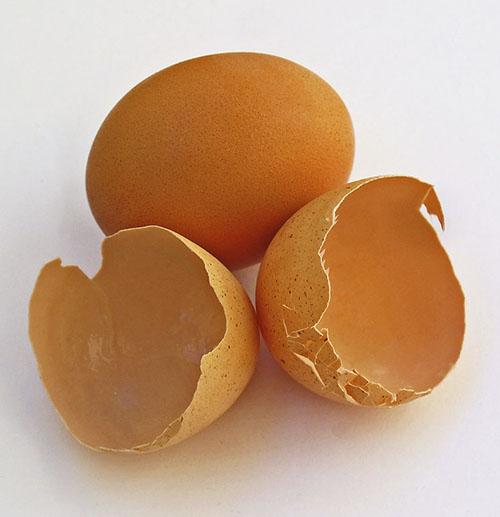escal-huevos