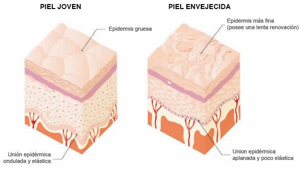 tipos de piel