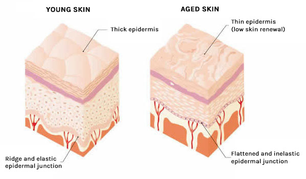 young-aged-skin